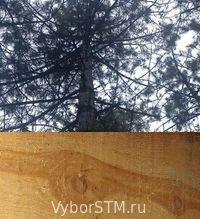 дерево - отличный материал для стен дома